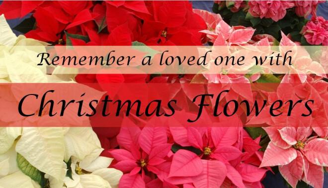 Noon Deadline for Christmas Flowers